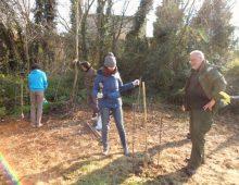 """Caffarella: nuovi alberi piantati dai volontari, """"gli alberi per il futuro"""""""