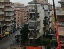 Via della Caffarelletta: tagliato l'albero dei pappagalli