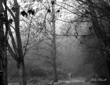 Caffarella: quando la fotografia diventa arte