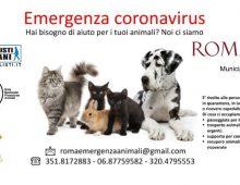 Municipio VII e l'emergenza animali