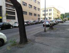 Via Pozzuoli: la nuova viabilità comincia dalla strage di alberi