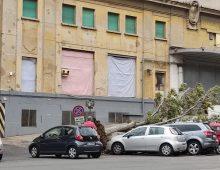 Via Tuscolana: cade un albero, auto danneggiate