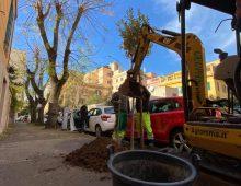 Progetto Ree Tree: altri nuovi alberi piantati nel quartiere