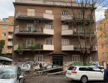 Via Macedonia: crolla un albero per il forte vento