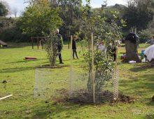 Caffarella: piantati nuovi 17 lecci