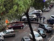 Via Appia Nuova: cade un altro pino, danni alle auto in sosta