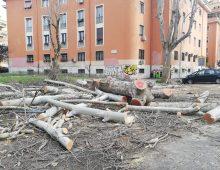 Piazzale Metronio: un'altra strage di alberi