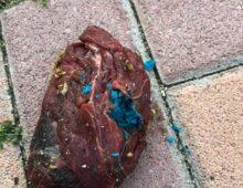 Via Amulio: trovata carne avvelenata nel cortile della scuola Tibullo