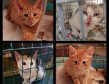 Via Lavinio: interviene la Sindaca Raggi, resa inoffensiva la 'serial killer dei gatti'