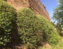 Viale Castrense, preservare le Mura (a chiacchiere)
