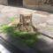 Via Pozzuoli, dubbi sugli alberi tagliati