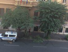 Nuova viabilità a San Giovanni, il massacro degli alberi