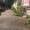Appio, marciapiedi invasi da piante infestanti