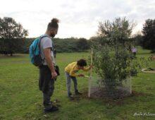 """Domenica 31 Ottobre, """"Piantiamola"""":  piantiamo nuovi alberi nella nostra Caffarella"""